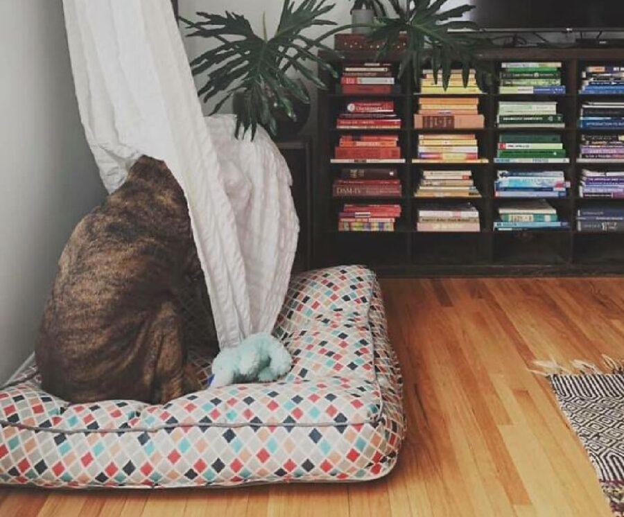 cagnolino dietro tende