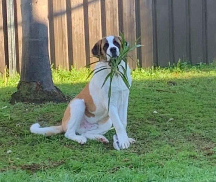 cagnolino dietro pianta piccola