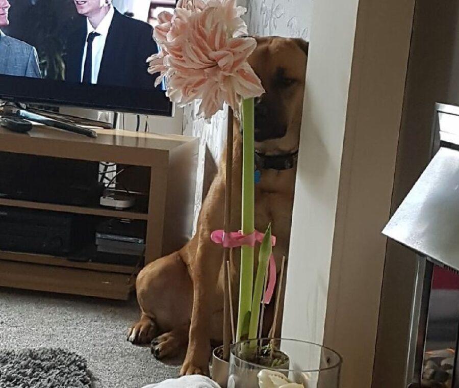 cagnolino pianta dentro vaso