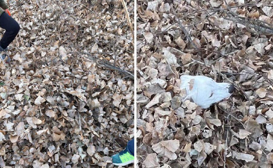 cagnolino bianco sotto foglie