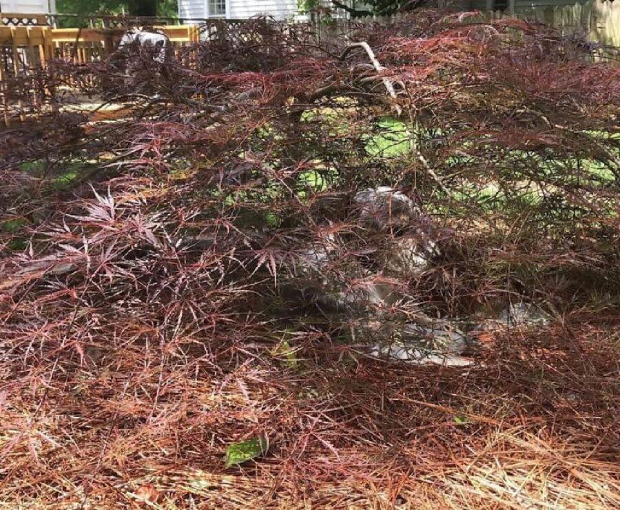 cagnolino rami albero coprono