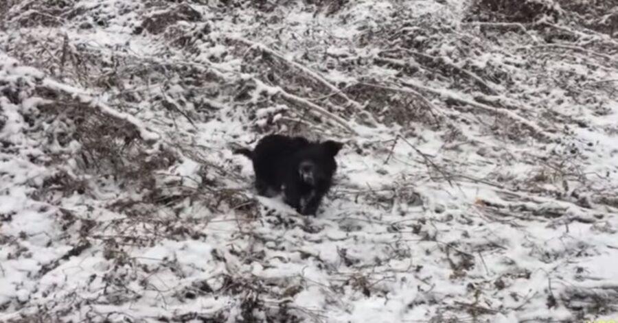 cagnolino randagio nella neve