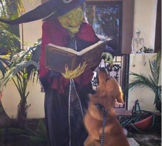cane vuole carezze da strega
