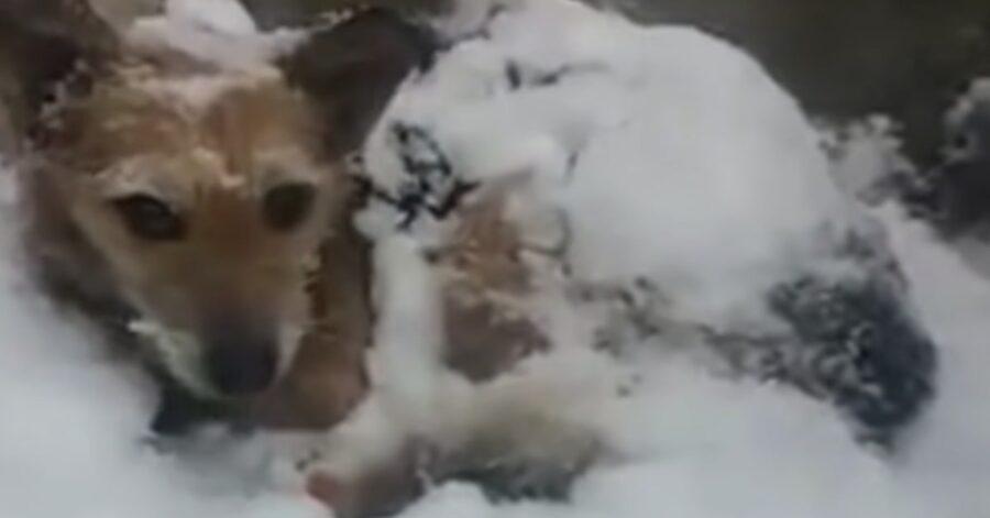 cane sotto la neve
