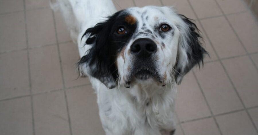 cane con la testa in alto e il naso nero