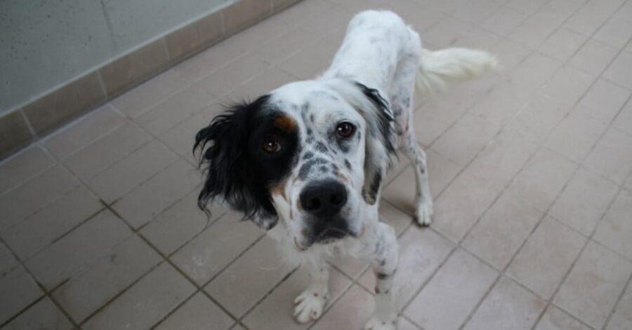 cagnolino bianco e nero