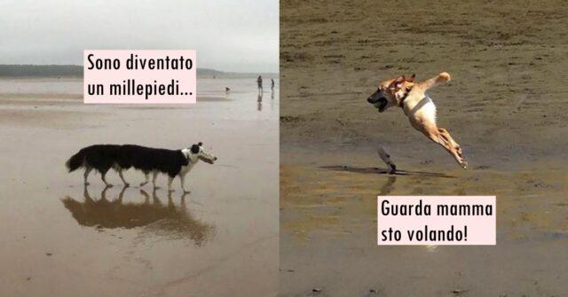 cani trasformati dalle foto