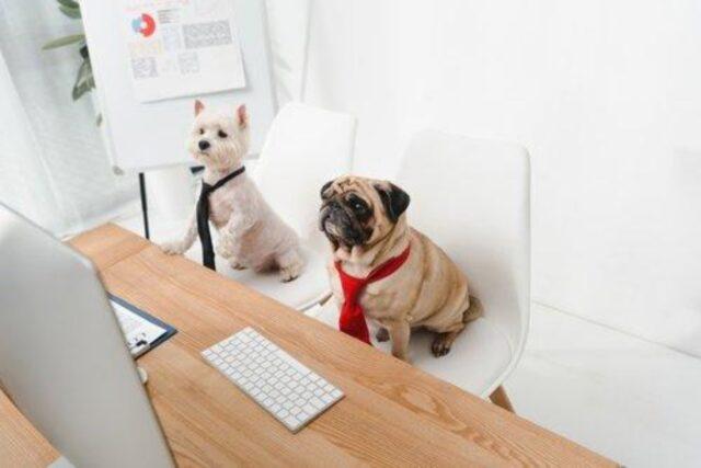 cani dietro scrivania