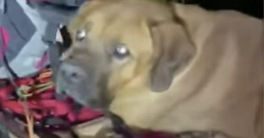 cane salvato in parco dello Utah
