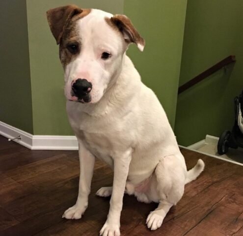 killian cane bianco