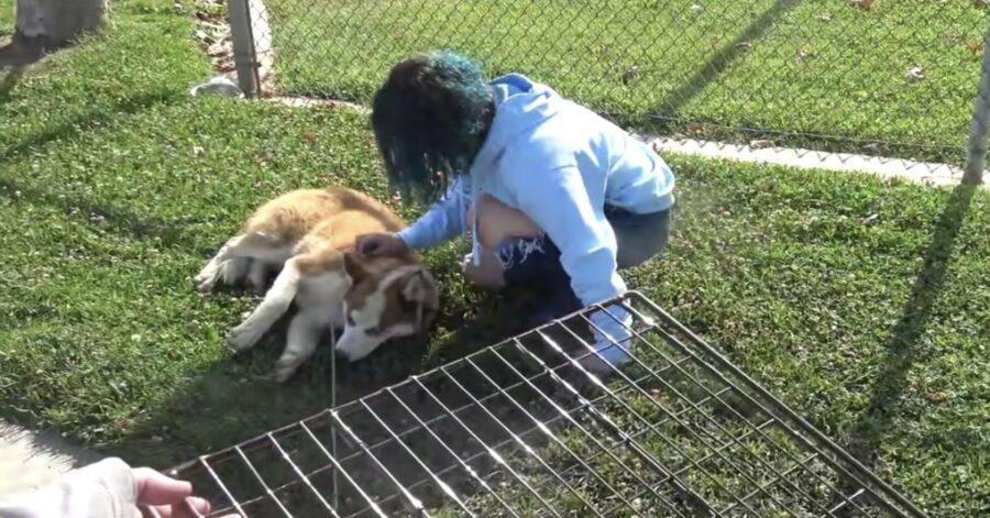 volontari salvano cane maltrattato