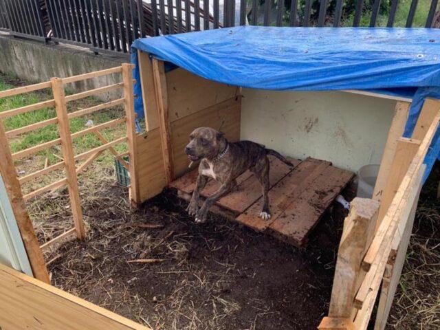 cane tenuto dentro recinto