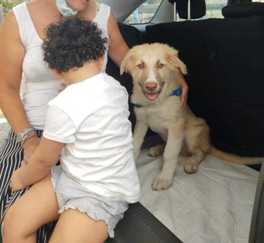 ronnie cucciolo adottato