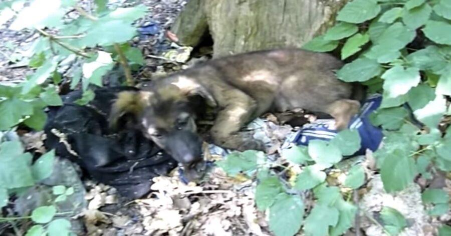 cagnolina salvata in Romania in una foresta