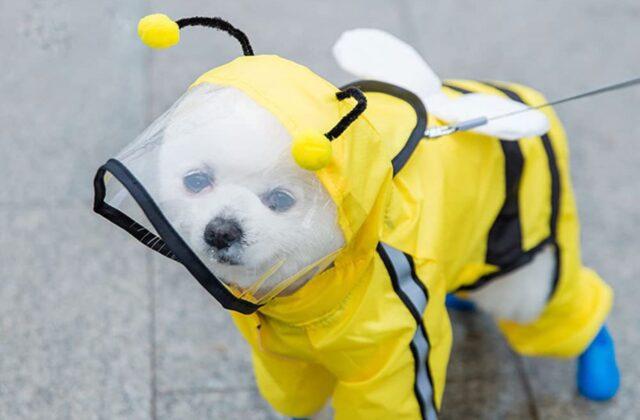 cane con impermeabile da ape