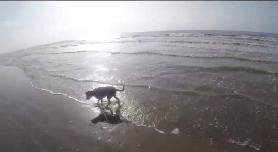 adorabile cane in spiaggia per la prima volta