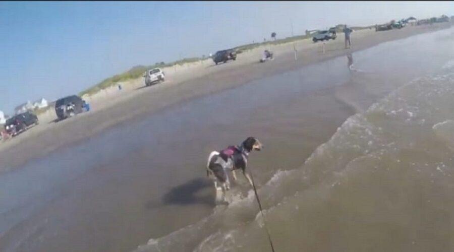 adorabile cane conosce la spiaggia