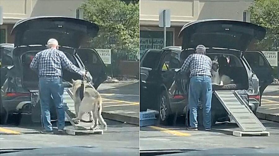 anziano costruisce rampa per cane
