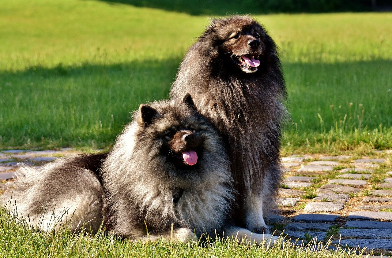 due cani insieme