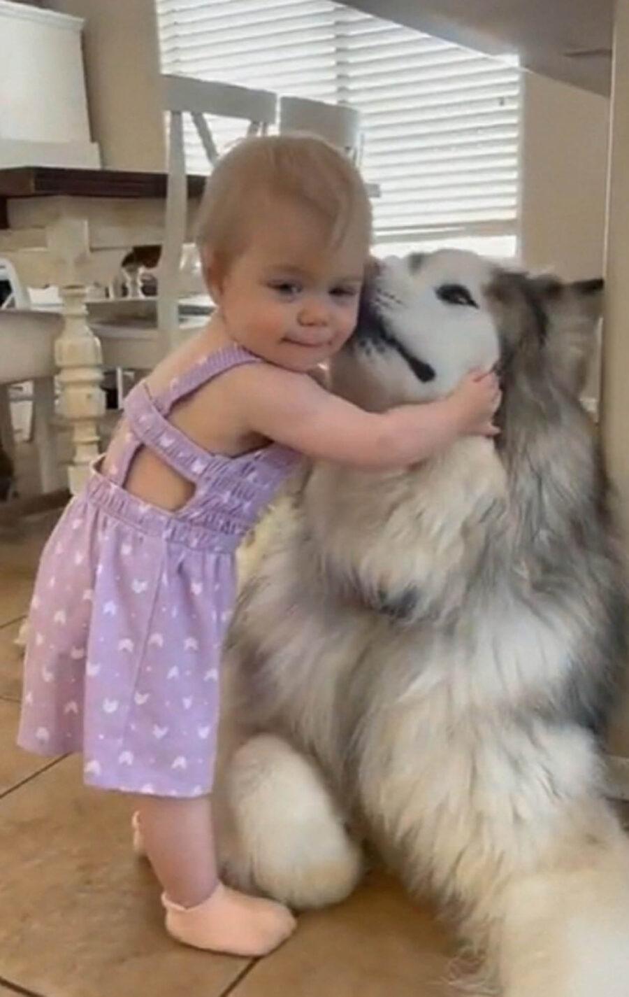 bambina con cane bianco e grigio