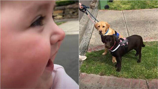 bambina ride vedendo cani in strada