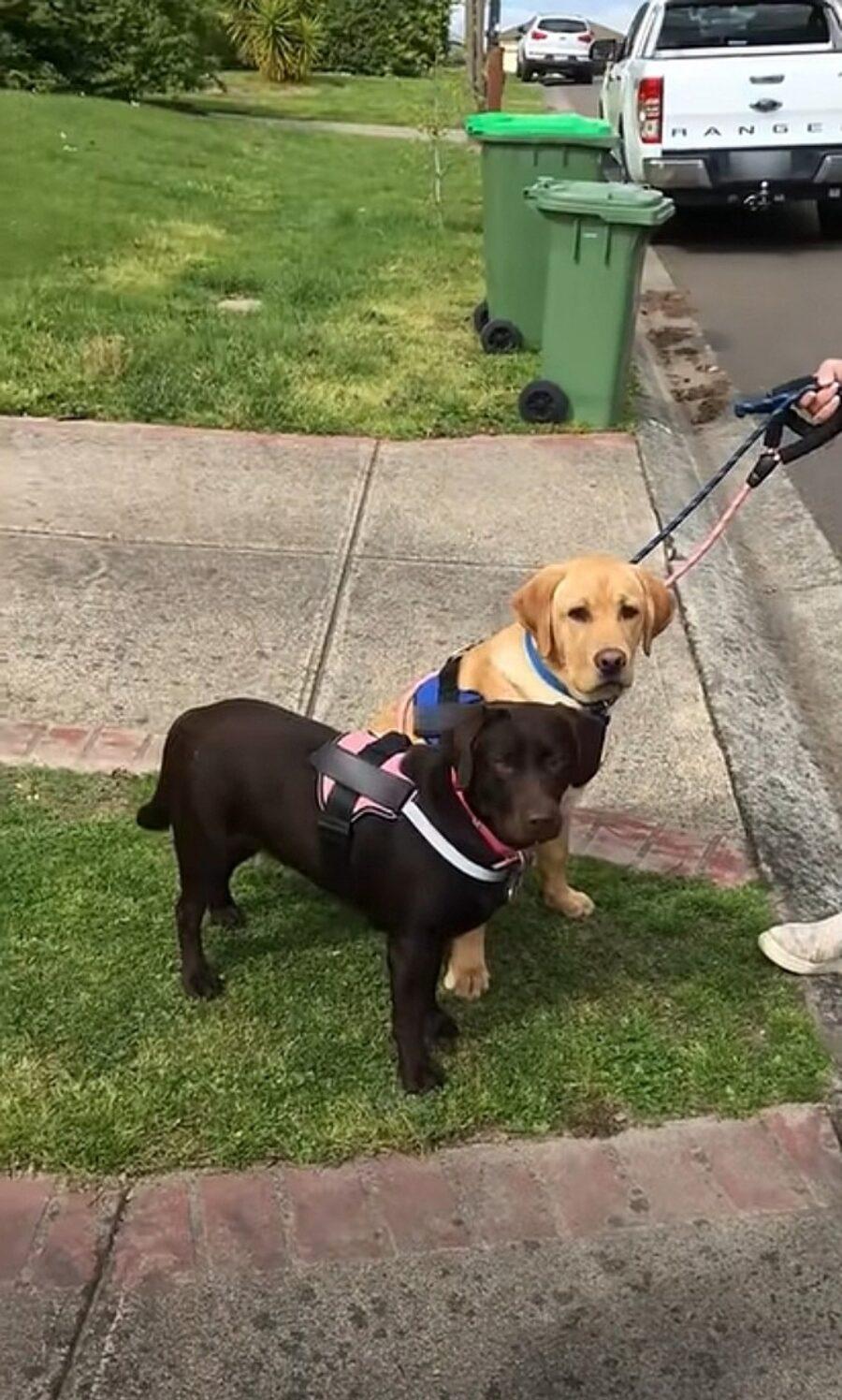 cane caramello e cioccolato
