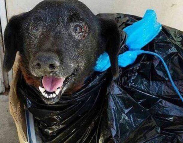 cane nero sorride