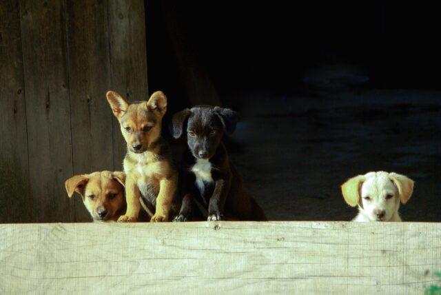 cagnolini salvati dalla loro mamma