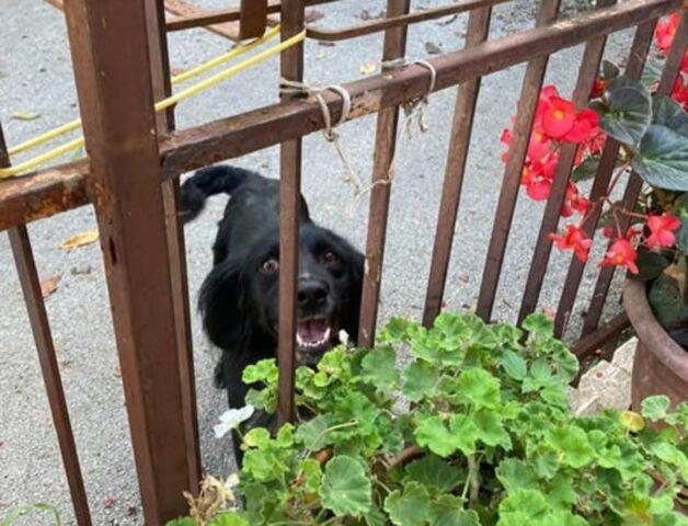 cane davanti a un terrazzo