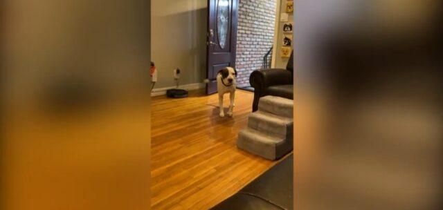 adorabile cane entra nella sua nuova casa