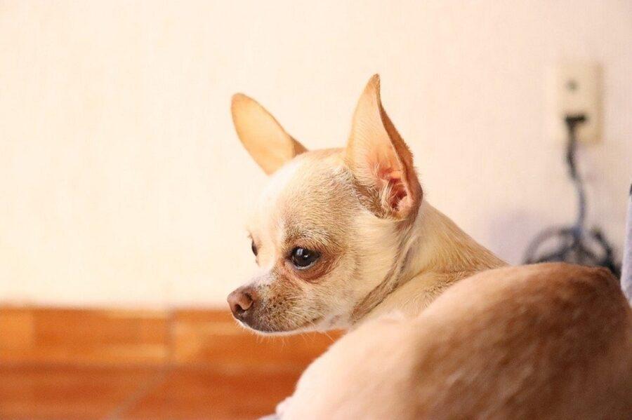 cane accoltellato dal suo proprietario