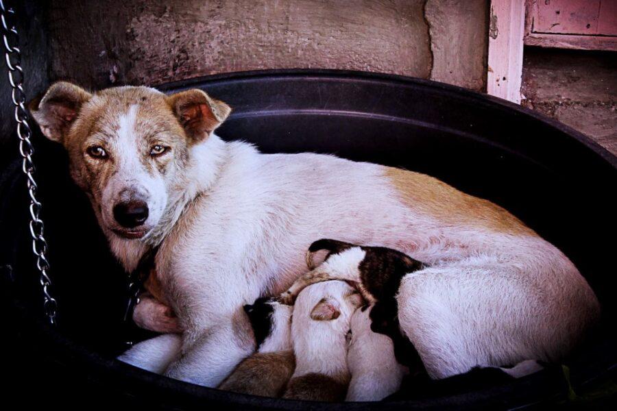 cane con i cuccioli
