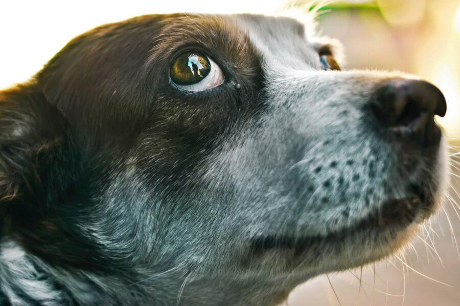 cane che guarda storto