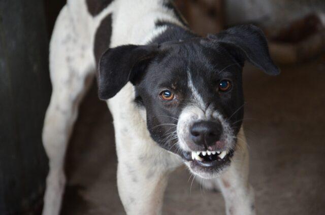 cane aggressivo mostra i denti
