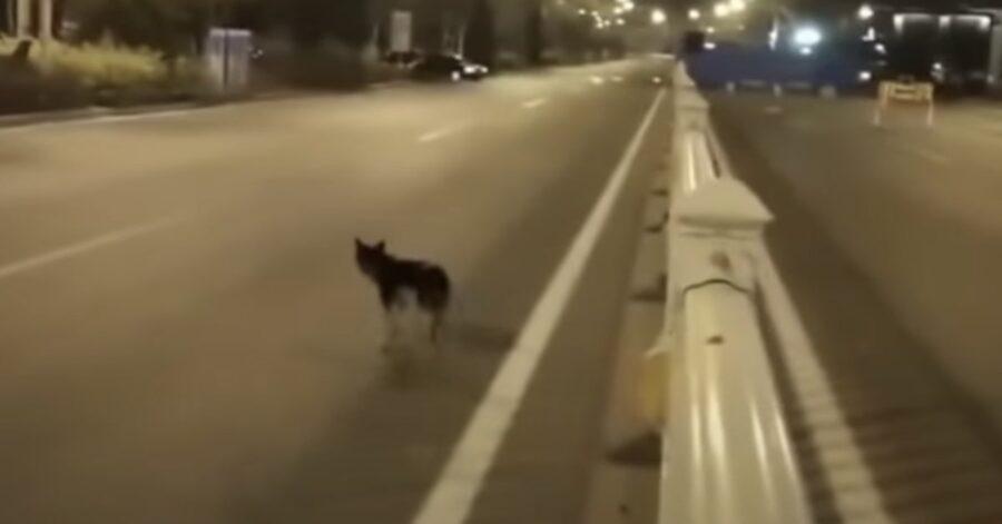 cagnolino fermo sul posto dove è morto il padrone