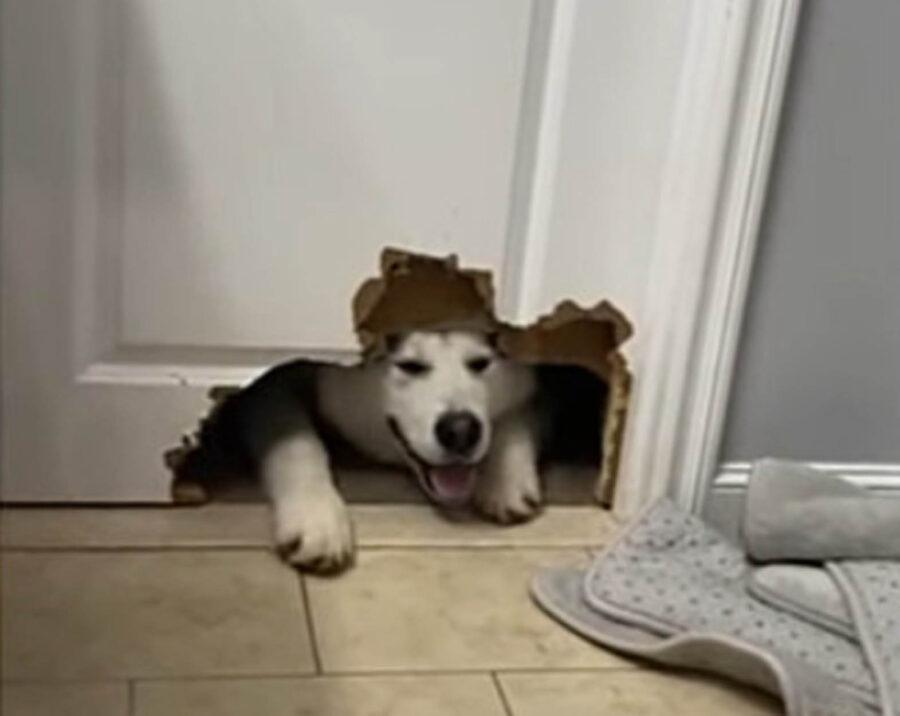 cane morde porta del bagno
