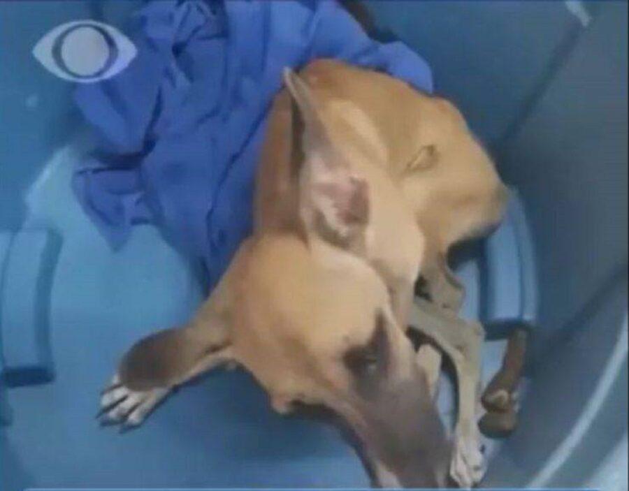 cane disabile rinchiuso in una cisterna