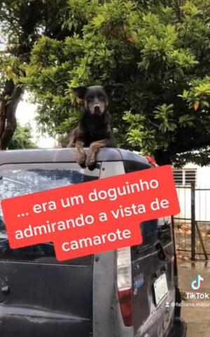 cane sopra macchina
