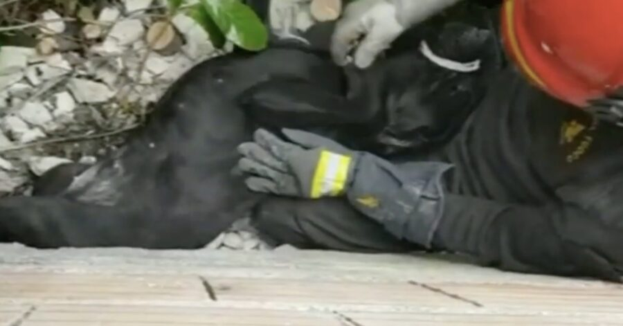 pompiere salva cagnolina