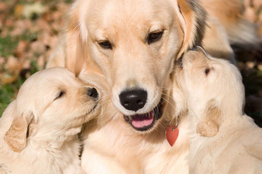 mamma cane e cuccioli