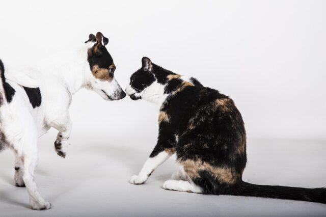 gatto e cane si sfidano