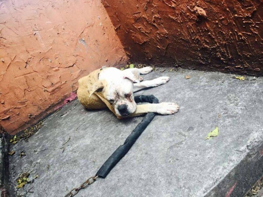 cane deperito e maltrattato