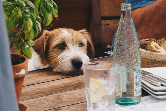 cane accanto al tavolo