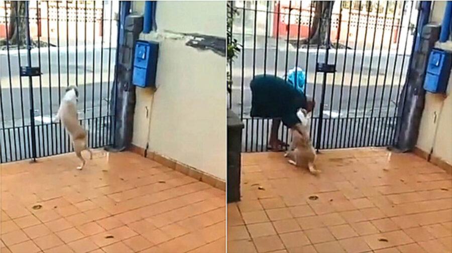 cane fa feste ad un passante