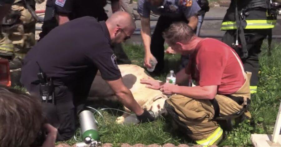 cane viene rianimato dai pompieri