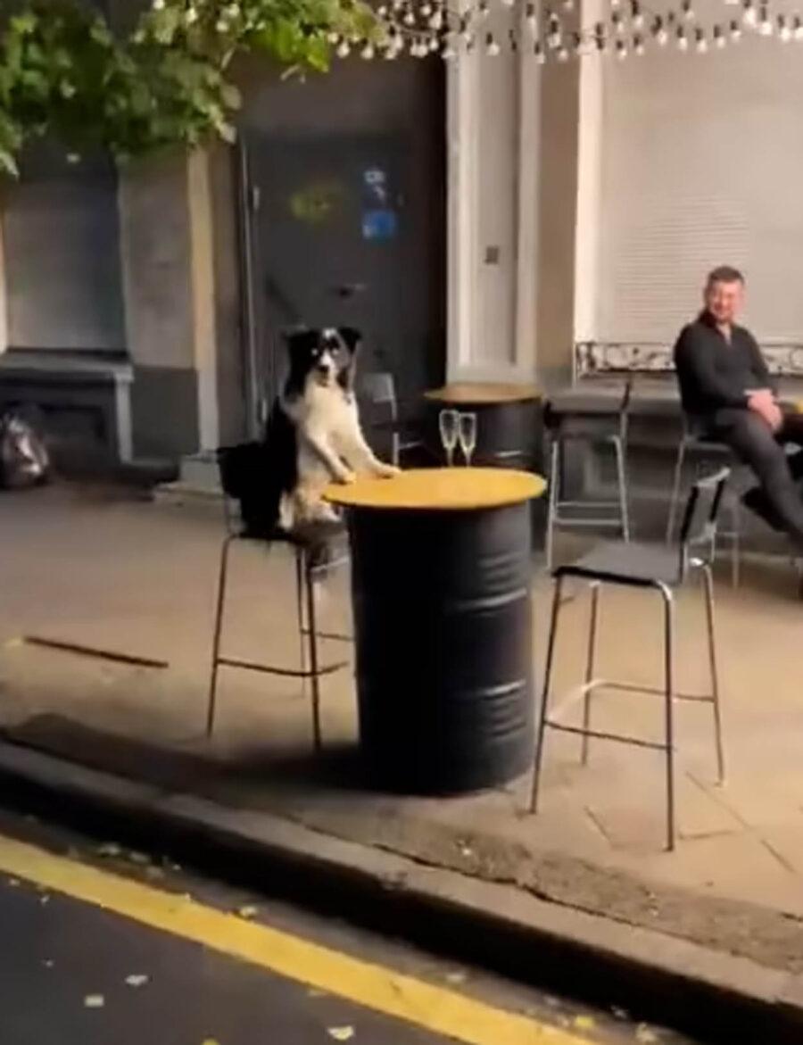 cane seduto al tavolo