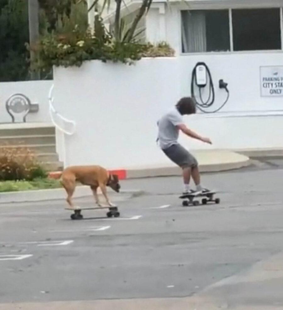 cane gioca sullo skateboard