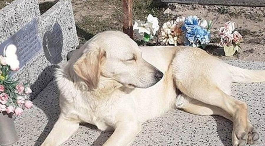 cane sdraiato sopra tomba