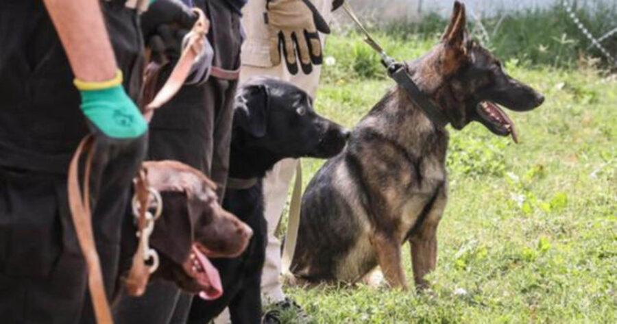 cani dell'esercito