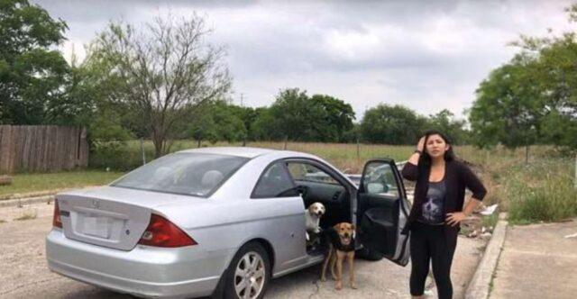 donna salva dei cani